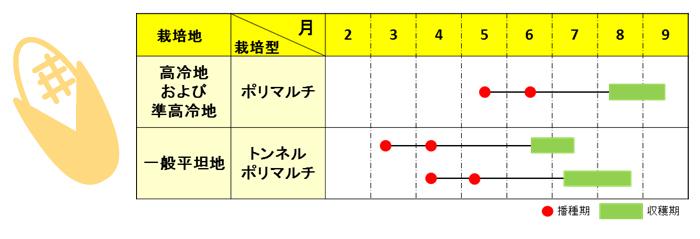 kimihime3
